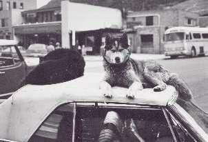 Dogs in Aspen